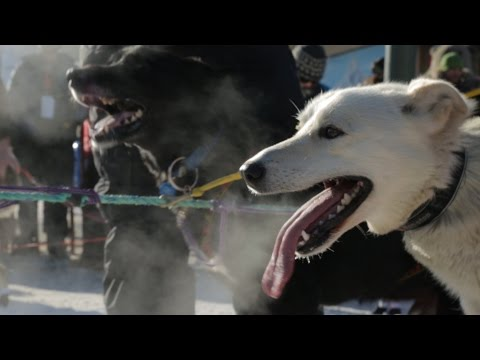 Team of Sled Dogs Drags Jeep Cherokee Out of the Snow in