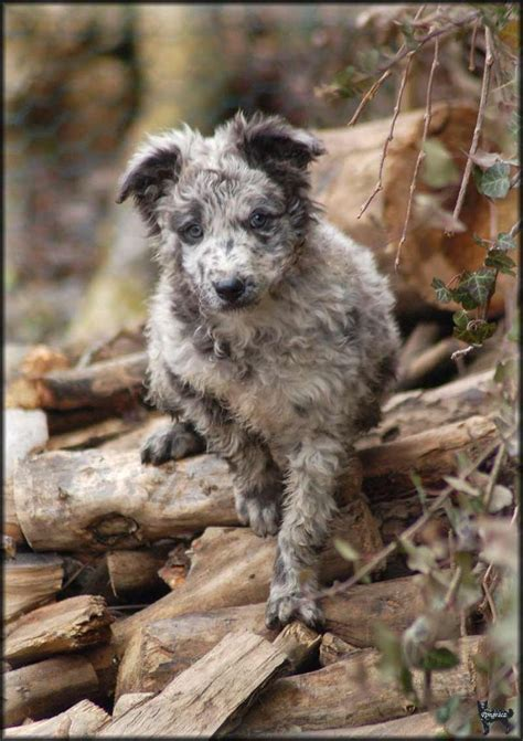 17 Best images about Hungarian dogs on Pinterest | Back to
