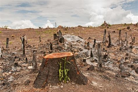 Deforestation - Causes, Effects and Solutions To Clearing