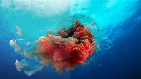 BBC to release 'Blue Planet II' on iPlayer in 4K and HDR