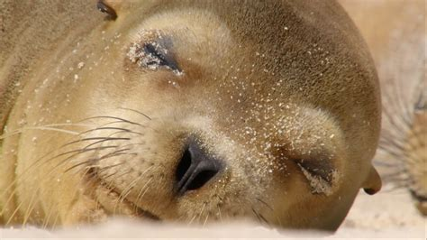 Sharing a beach with baby sea lions - Galápagos: Islands