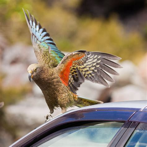 Parrot steals man's holiday money, and a Jaunt